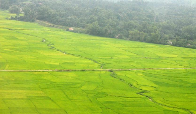 Mường Thanh, cánh đồng lớn nhất Tây Bắc